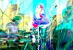 Rainbow Island // Live