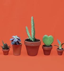 The Plantswap #6 - Scambio di piante e talee